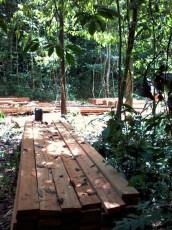 déforestation illégale